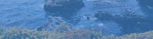 Les effets des pollutions aux hydrocarbures sur l'environnement marin